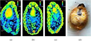 nálisis por tomografía computarizada por rayos x de picudo rojo en estado de larva. Fuente: T. León-Quinto et al. Journal of Thermal Biology 94 (2020) 102748