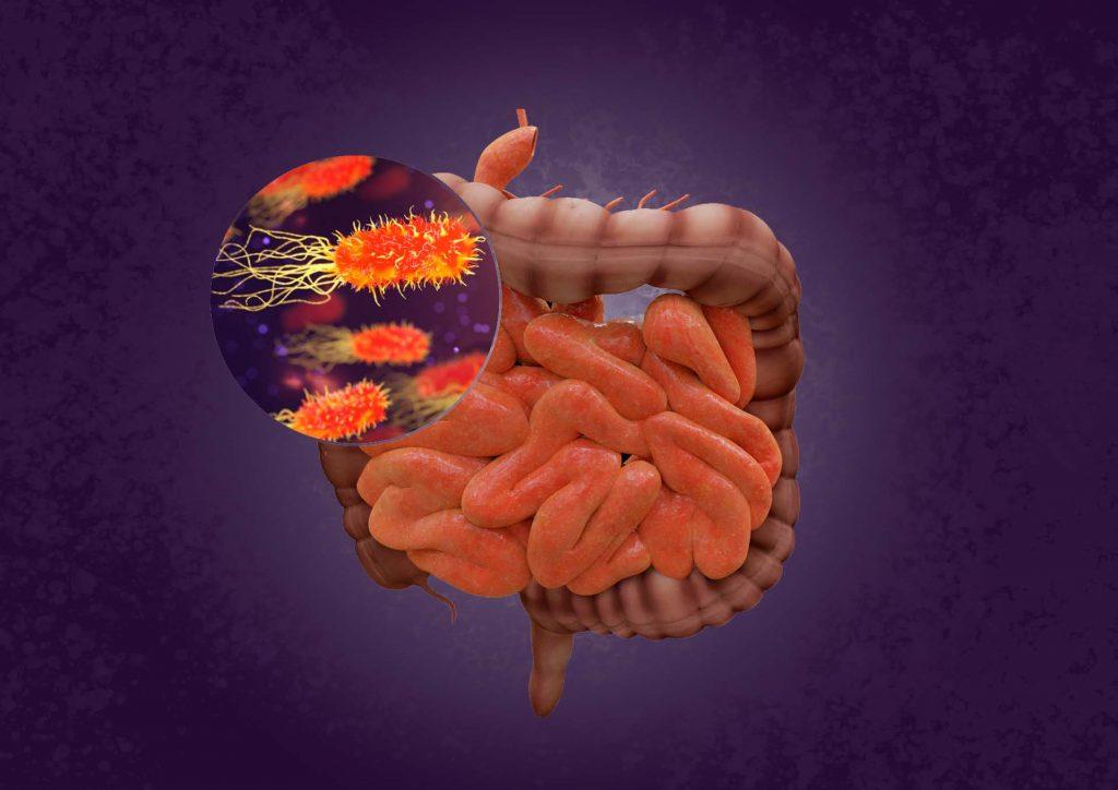 Intestino y bacterias